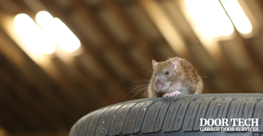 Five-tips-to-keep-pest-of-of-your-garage-facebook-image